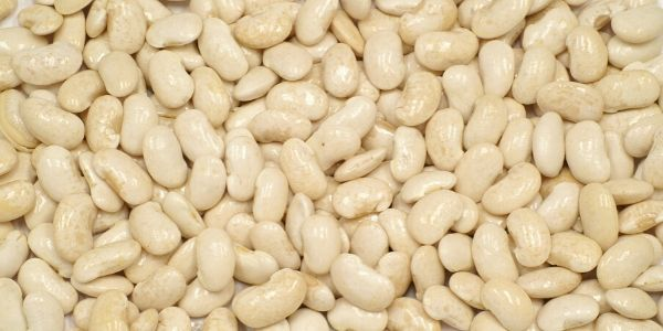 Navy beans picture